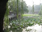 The Lotus Flowers in a Summer Palace Garden