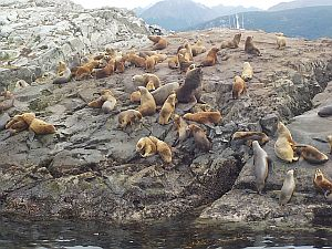 sea lions at the Ushuaia Lighthouse